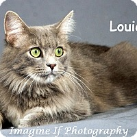 Adopt A Pet :: Louie - Oklahoma City, OK