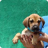 Adopt A Pet :: Belt - Oviedo, FL