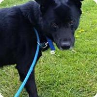 Adopt A Pet :: Buddy - Dillsburg, PA