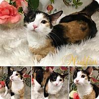 Adopt A Pet :: Muffin - Joliet, IL