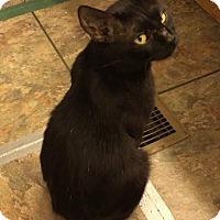 Adopt A Pet :: Mittens - Vass, NC