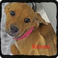 Adopt A Pet :: Kristen - Old Saybrook, CT