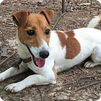 Adopt A Pet :: Disney - Allentown, PA