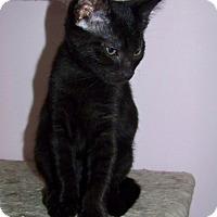 Adopt A Pet :: Michonne - Gaithersburg, MD