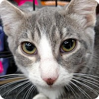 Adopt A Pet :: Luna - San Marcos, TX