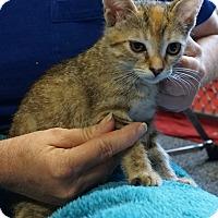 Adopt A Pet :: Winnie (Honey) - Pleasanton, CA