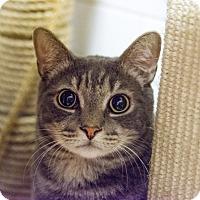 Adopt A Pet :: Pierre - New York, NY