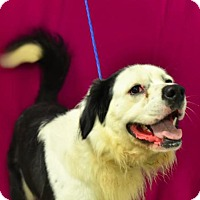 Spaniel (Unknown Type) Mix Dog for adoption in Erwin, Tennessee - Finn
