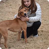 Adopt A Pet :: Bella - Memphis, TN