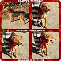 Adopt A Pet :: PRANCER - Kenansville, NC