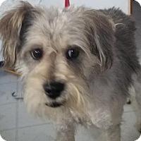 Adopt A Pet :: Oscar - Kenosha, WI