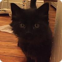 Adopt A Pet :: Parker - Staten Island, NY