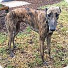 Adopt A Pet :: WW's GoAway