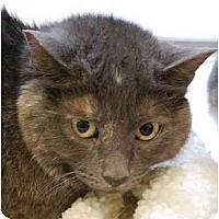 Adopt A Pet :: Layla - Modesto, CA