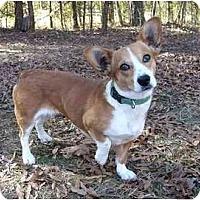 Adopt A Pet :: Nora - Mocksville, NC