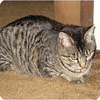 Adopt A Pet :: Beatrice - Davis, CA