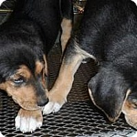 Adopt A Pet :: Sleepy - South Jersey, NJ