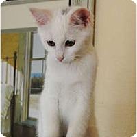 Adopt A Pet :: Frannie - Palmdale, CA