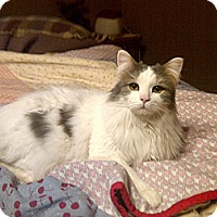 Adopt A Pet :: Fluffy - Douglas, ON