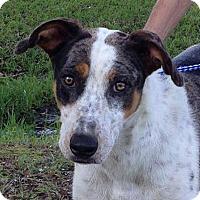 Adopt A Pet :: Tink - Preston, CT