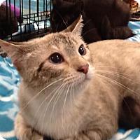 Adopt A Pet :: Sochi - San Antonio, TX