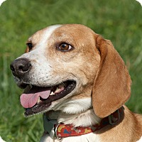 Adopt A Pet :: ELVIS PRESLEY - Limekiln, PA