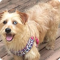 Adopt A Pet :: Buzz - Grand Rapids, MI