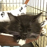 Adopt A Pet :: Force - Byron Center, MI