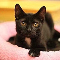 Adopt A Pet :: Ms. Kitty - Mebane, NC
