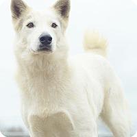 Adopt A Pet :: A - BLANCO - Portland, OR