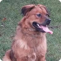 Adopt A Pet :: Ben - Paris, IL