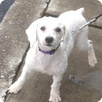 Adopt A Pet :: Fluffy - Maquoketa, IA