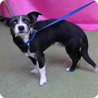 Adopt A Pet :: URGENT on 10/26 @DEVORE - San Bernardino, CA