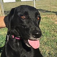 Adopt A Pet :: Reese - Woodward, OK