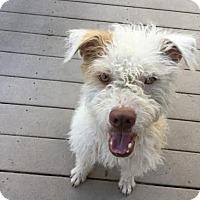 Adopt A Pet :: Kevin - Fullerton, CA