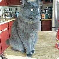Adopt A Pet :: Alex - Fredericksburg, VA