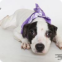 Adopt A Pet :: Kylie - Baton Rouge, LA