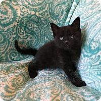 Adopt A Pet :: Terk - Tampa, FL