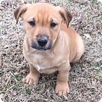 Adopt A Pet :: Hayes - pending - Manchester, NH