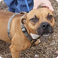 Adopt A Pet :: Gidget - Cleveland, MS
