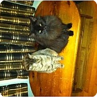 Adopt A Pet :: CLEO - Clay, NY