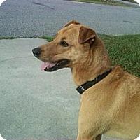 Adopt A Pet :: Rubie Wilder - Southampton, PA