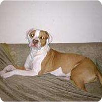Adopt A Pet :: Precious-sweet pup - Sacramento, CA