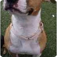 Adopt A Pet :: Dandelion - San Francisco, CA