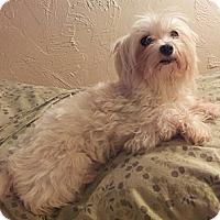 Adopt A Pet :: Grace - Fort Lauderdale, FL