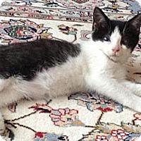 Adopt A Pet :: Dawn - East Hanover, NJ