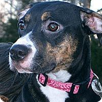 Adopt A Pet :: Lori - Conway, AR