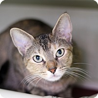 Adopt A Pet :: Tina Louise - Chicago, IL