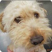 Adopt A Pet :: Moe - Gainesville, FL