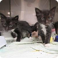 Adopt A Pet :: Gill - Athens, GA
